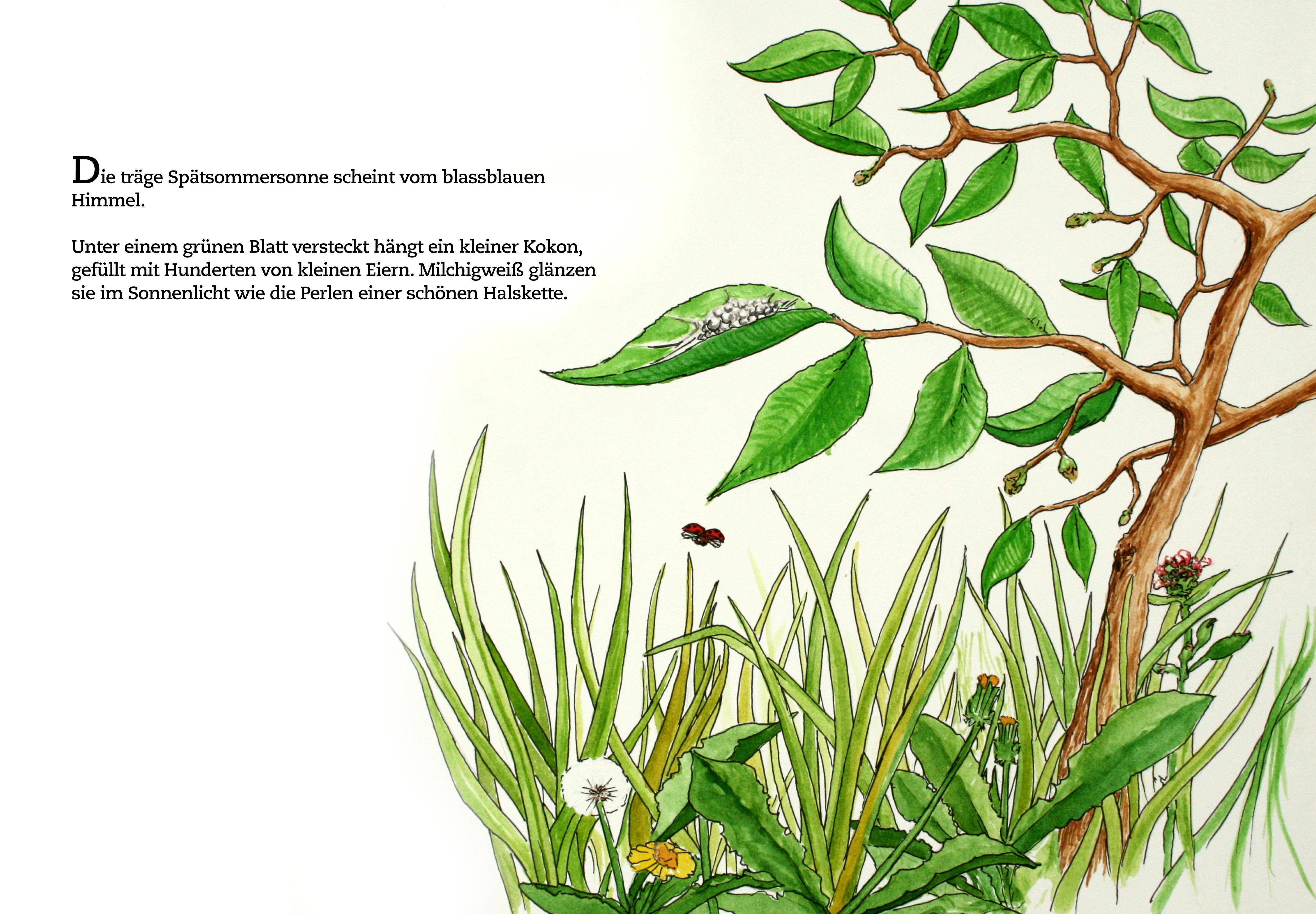 Seite 1 Die kleine Löwenspinne von Charoline Bauer